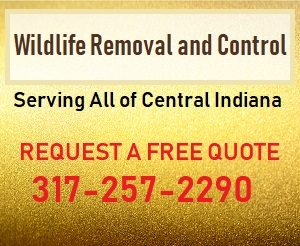 Indianapolis Wildlife Removal 317-257-2290