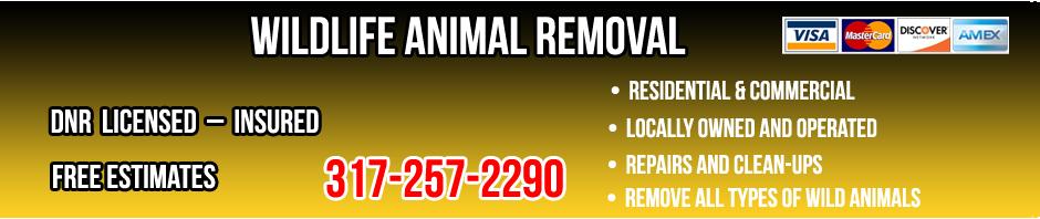 Wildlife Removal Information